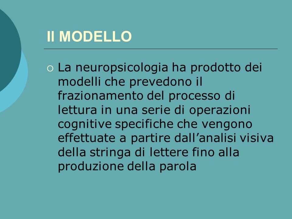 Il MODELLO