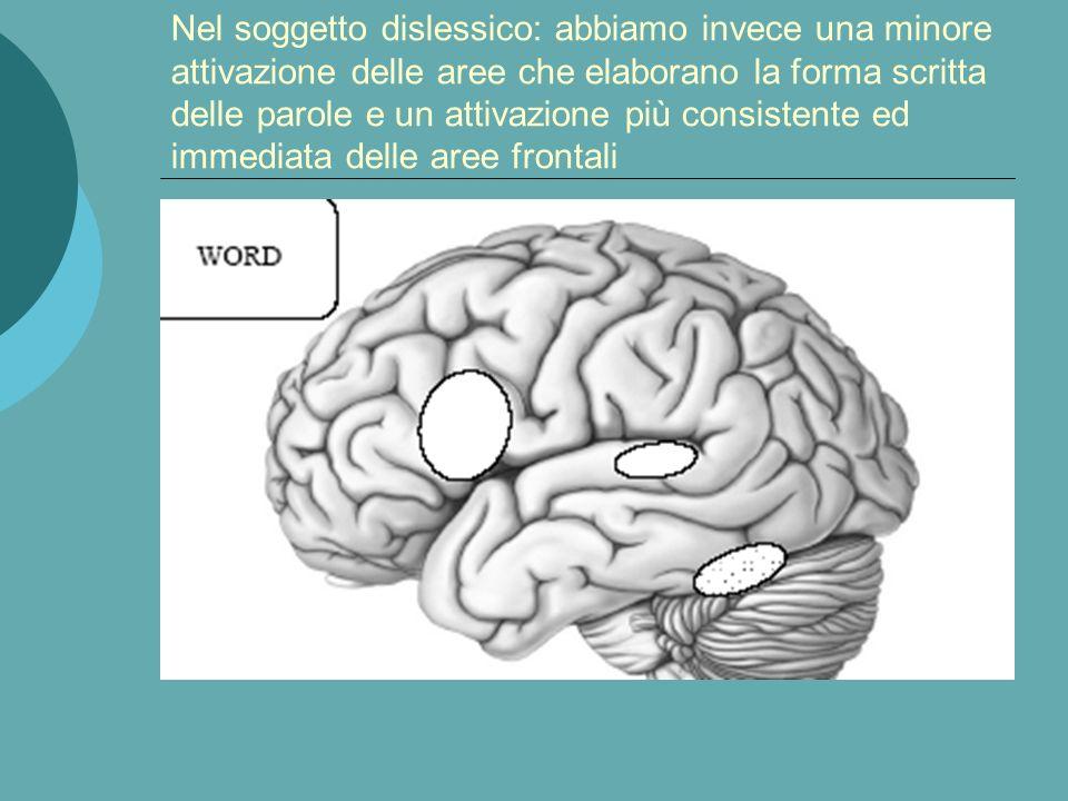Nel soggetto dislessico: abbiamo invece una minore attivazione delle aree che elaborano la forma scritta delle parole e un attivazione più consistente ed immediata delle aree frontali
