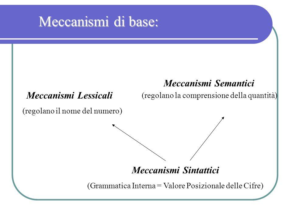 Meccanismi di base: Meccanismi Semantici (regolano la comprensione della quantità) Meccanismi Lessicali.
