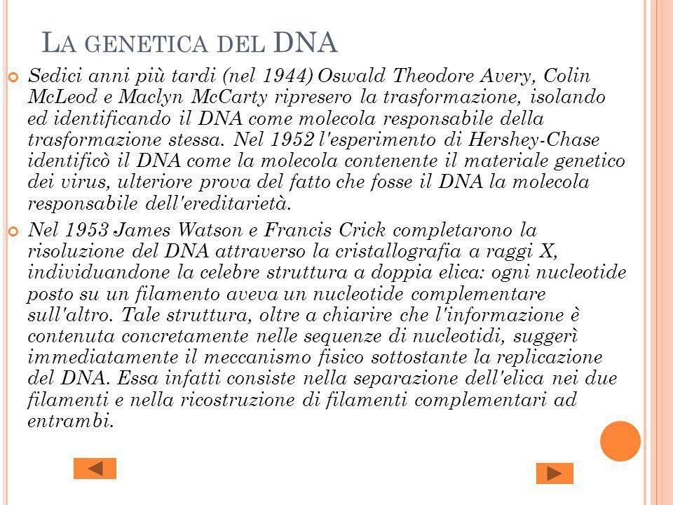 La genetica del DNA