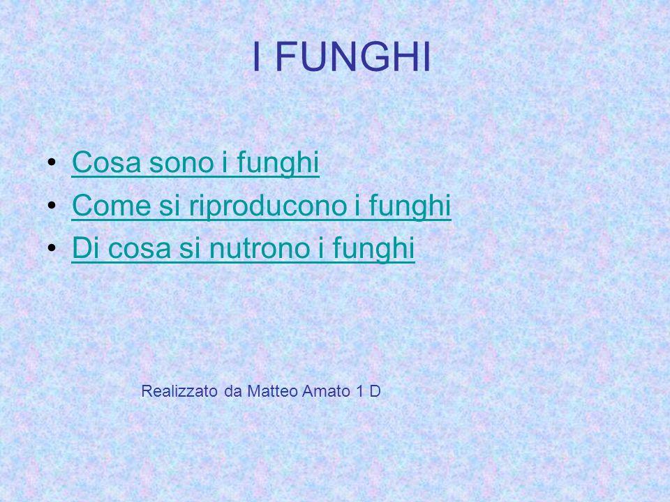 I FUNGHI Cosa sono i funghi Come si riproducono i funghi