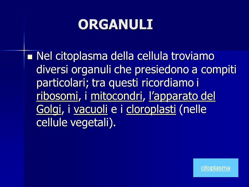ORGANULI