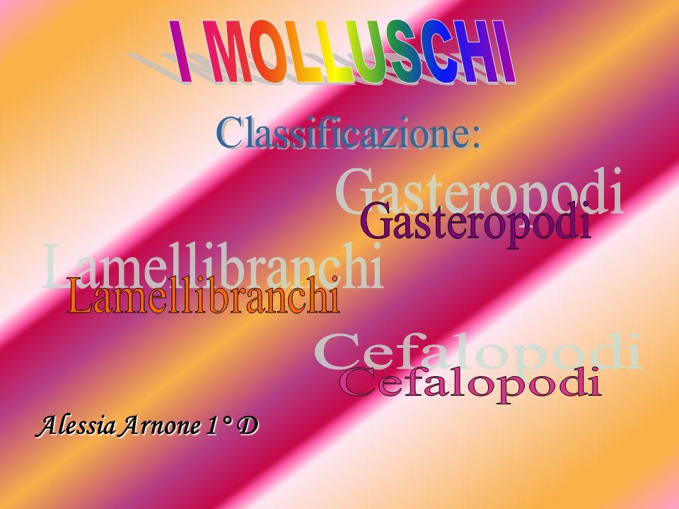 I MOLLUSCHI Alessia Arnone 1° D Classificazione: Gasteropodi