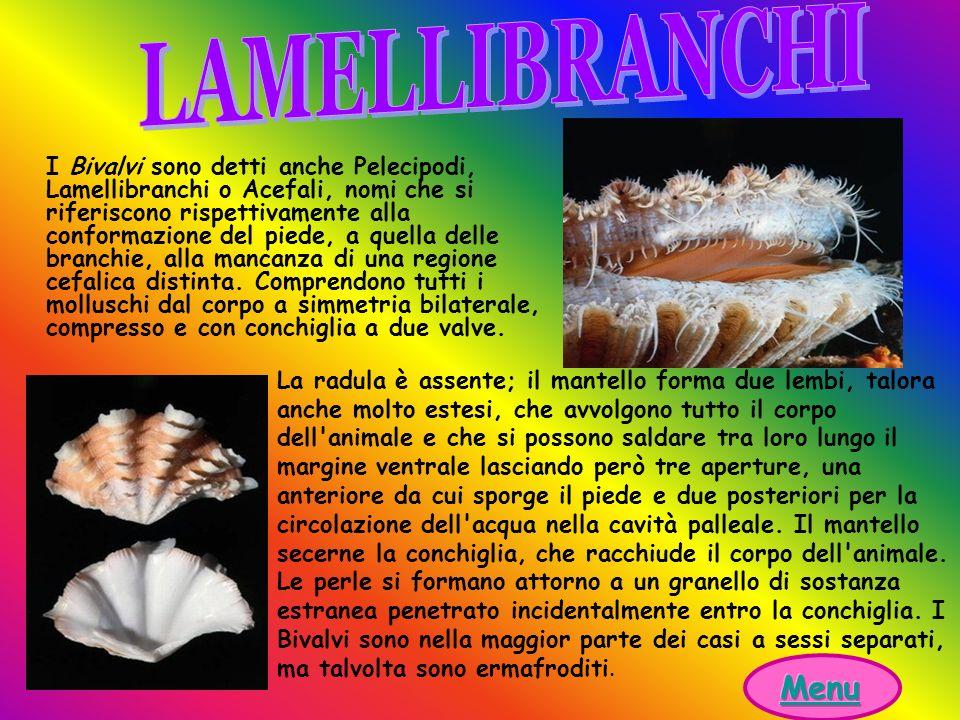 LAMELLIBRANCHI