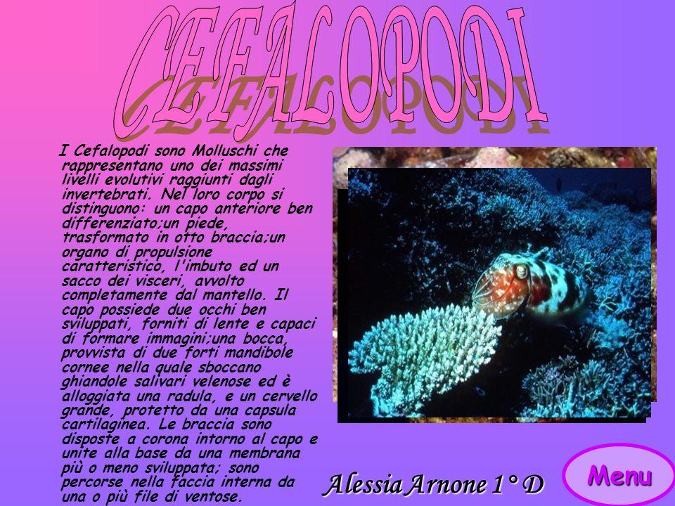 CEFALOPODI Alessia Arnone 1° D Menu