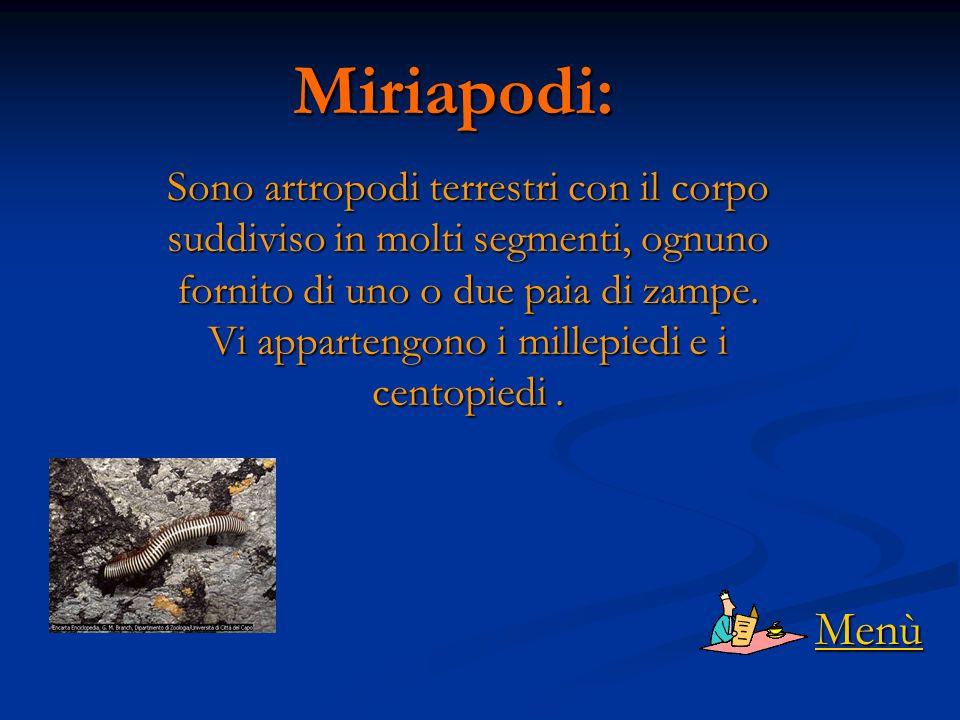 Miriapodi: