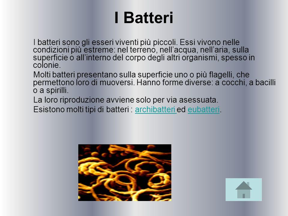 I Batteri
