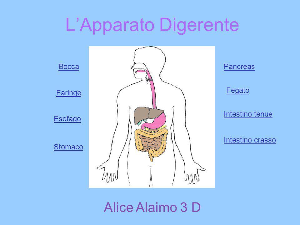 L'Apparato Digerente Alice Alaimo 3 D Bocca Pancreas Fegato Faringe