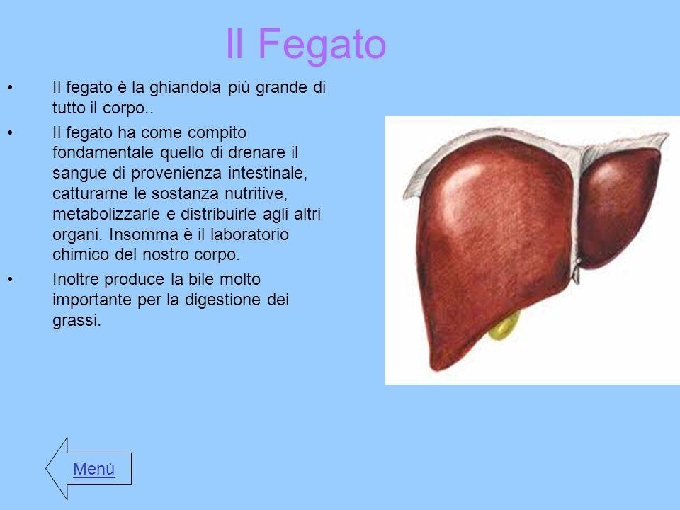 Il Fegato Il fegato è la ghiandola più grande di tutto il corpo..