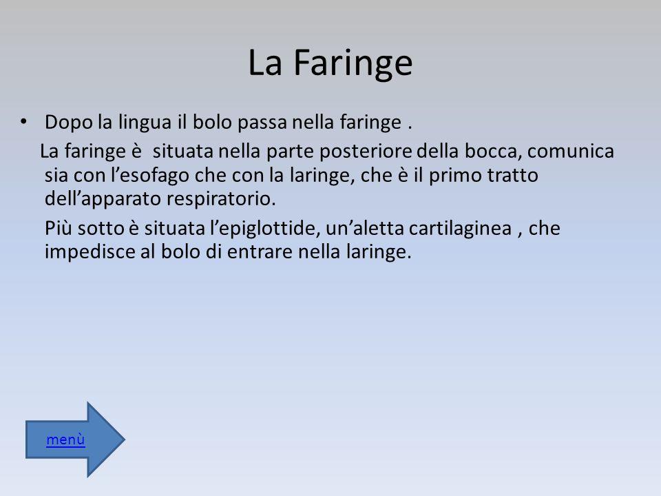 La Faringe Dopo la lingua il bolo passa nella faringe .