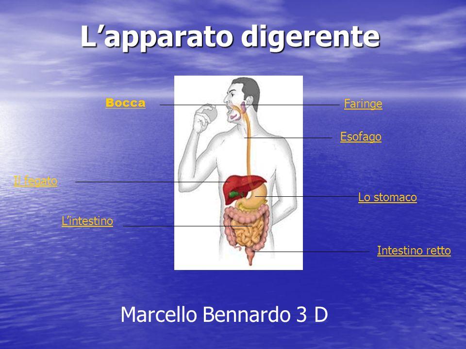 L'apparato digerente Marcello Bennardo 3 D Bocca Faringe Esofago