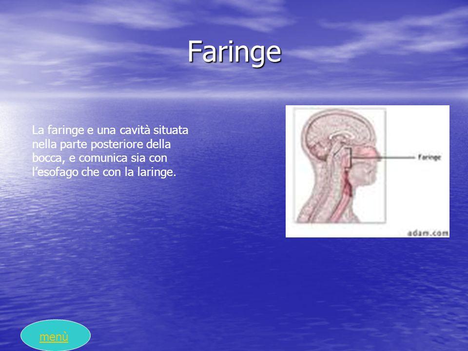 Faringe La faringe e una cavità situata nella parte posteriore della bocca, e comunica sia con l'esofago che con la laringe.