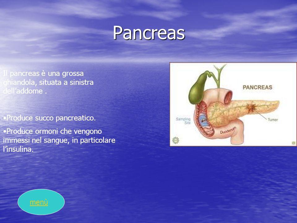 Pancreas Il pancreas è una grossa ghiandola, situata a sinistra dell'addome . Produce succo pancreatico.