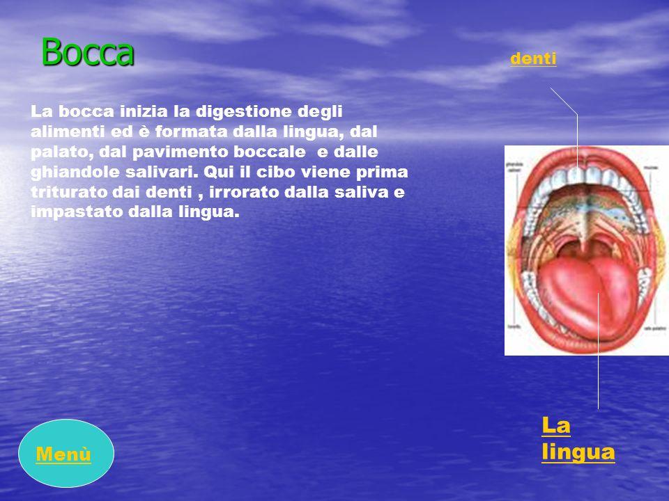 Bocca La lingua Menù denti
