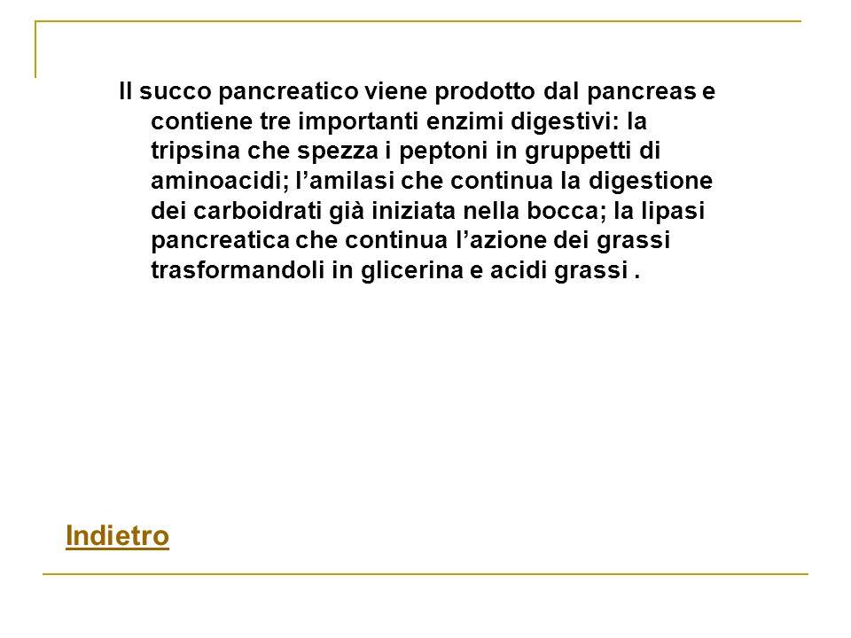 Il succo pancreatico viene prodotto dal pancreas e contiene tre importanti enzimi digestivi: la tripsina che spezza i peptoni in gruppetti di aminoacidi; l'amilasi che continua la digestione dei carboidrati già iniziata nella bocca; la lipasi pancreatica che continua l'azione dei grassi trasformandoli in glicerina e acidi grassi .