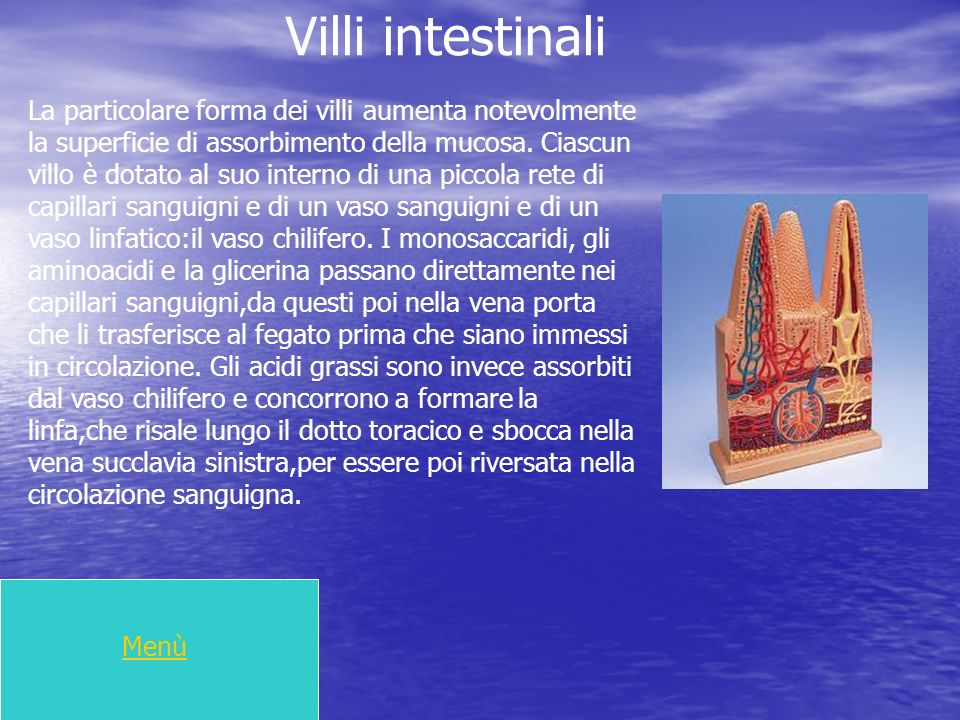 Villi intestinali