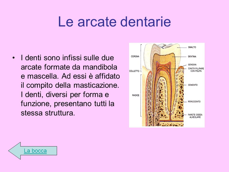 Le arcate dentarie