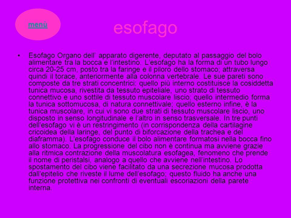 esofago menù.