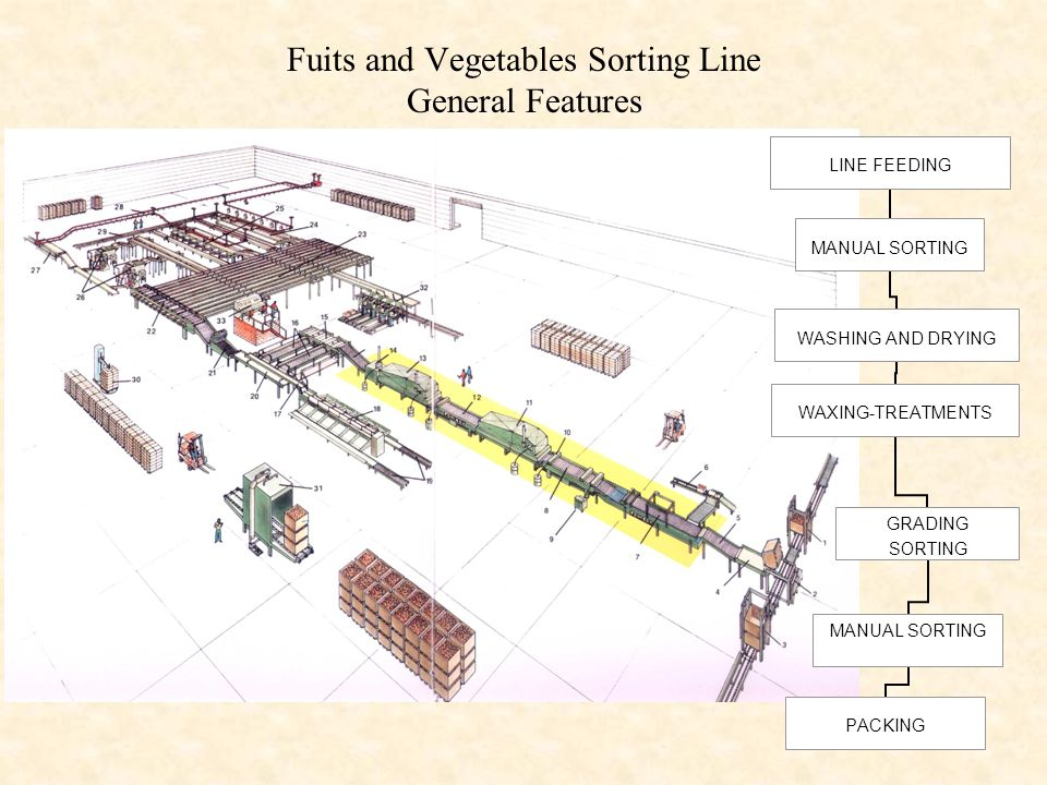 Fuits and Vegetables Sorting Line General Features