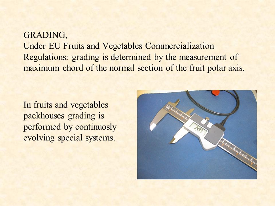 GRADING, Under EU Fruits and Vegetables Commercialization Regulations: grading is determined by the measurement of maximum chord of the normal section of the fruit polar axis.