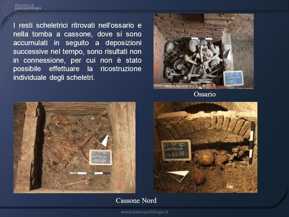 I resti scheletrici ritrovati nell'ossario e nella tomba a cassone, dove si sono accumulati in seguito a deposizioni successive nel tempo, sono risultati non in connessione, per cui non è stato possibile effettuare la ricostruzione individuale degli scheletri.