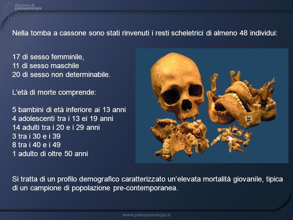 Nella tomba a cassone sono stati rinvenuti i resti scheletrici di almeno 48 individui: