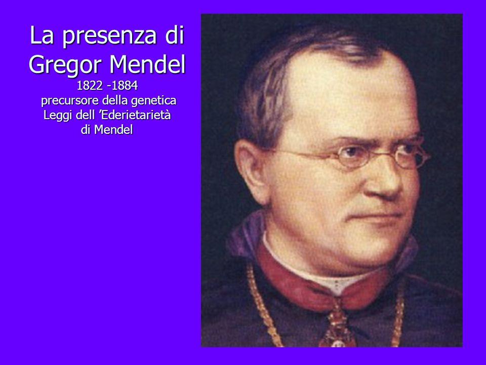 La presenza di Gregor Mendel 1822 -1884 precursore della genetica Leggi dell 'Ederietarietà di Mendel