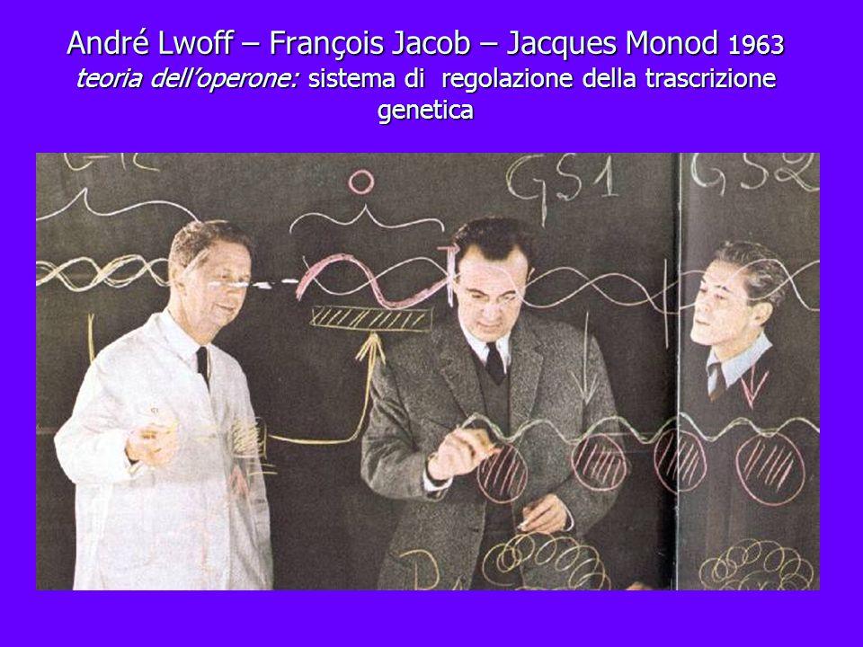 André Lwoff – François Jacob – Jacques Monod 1963 teoria dell'operone: sistema di regolazione della trascrizione genetica