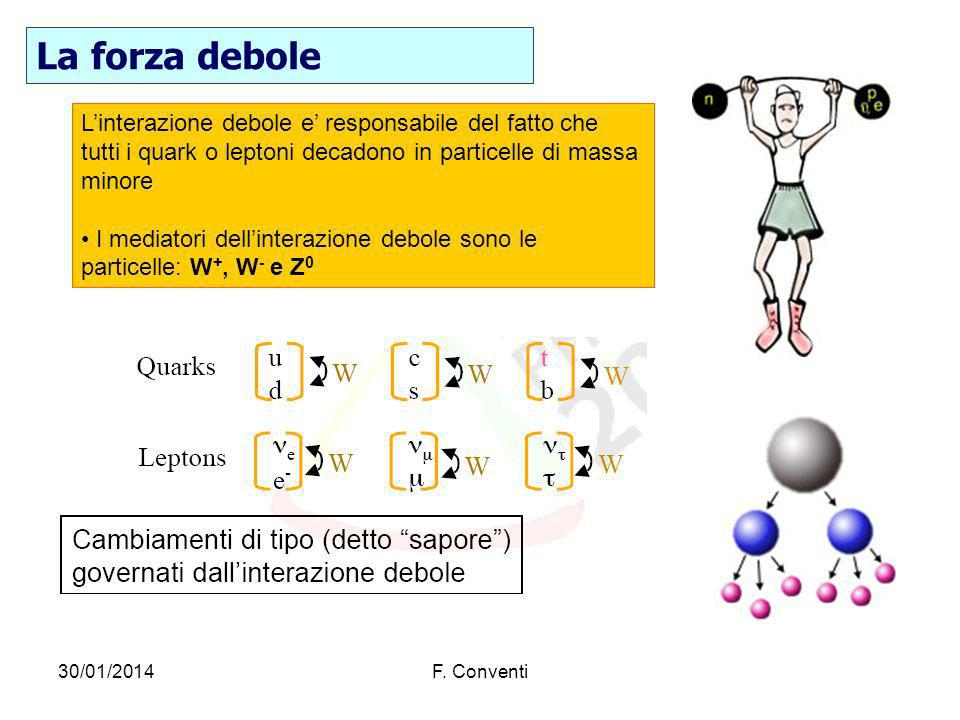 La forza debole L'interazione debole e' responsabile del fatto che tutti i quark o leptoni decadono in particelle di massa minore.