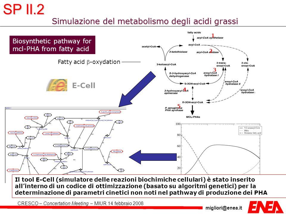 Simulazione del metabolismo degli acidi grassi