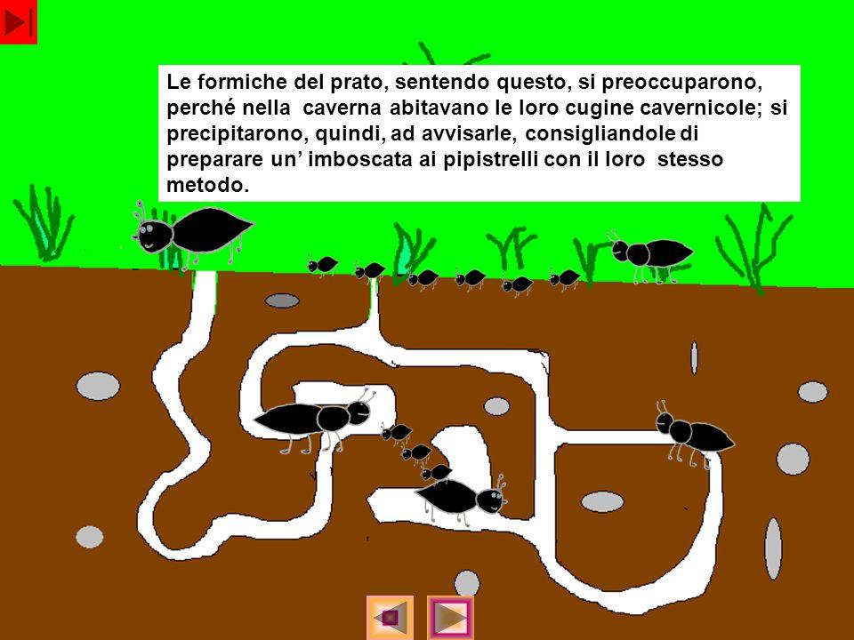 Le formiche del prato, sentendo questo, si preoccuparono, perché nella caverna abitavano le loro cugine cavernicole; si precipitarono, quindi, ad avvisarle, consigliandole di preparare un' imboscata ai pipistrelli con il loro stesso metodo.