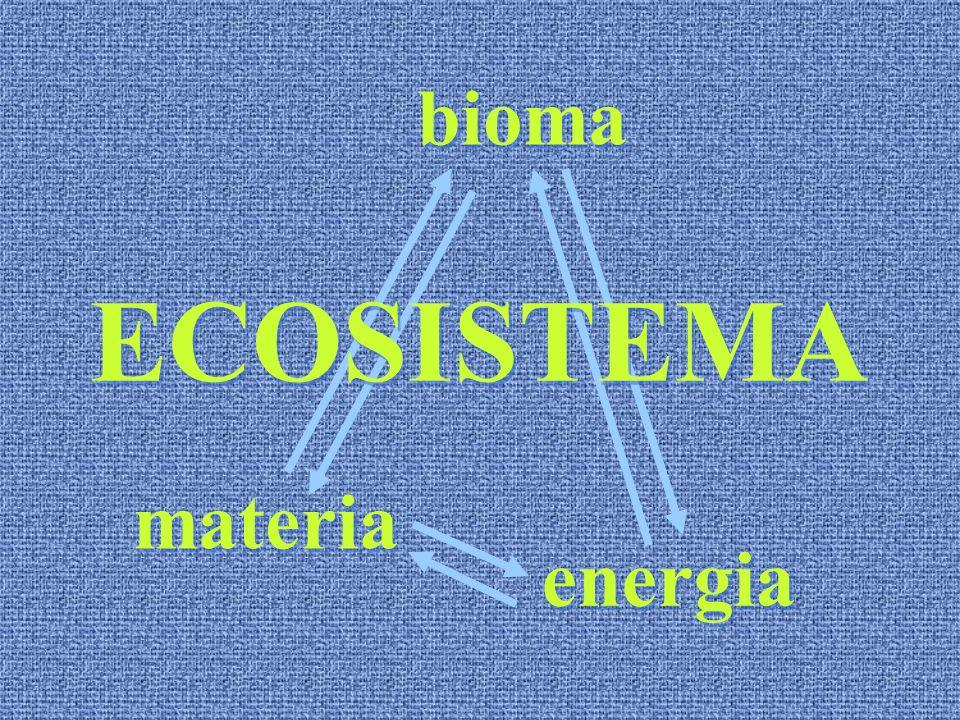 bioma ECOSISTEMA materia energia