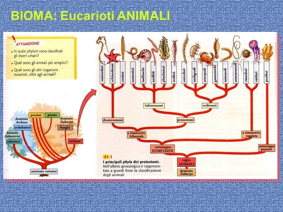 BIOMA: Eucarioti ANIMALI