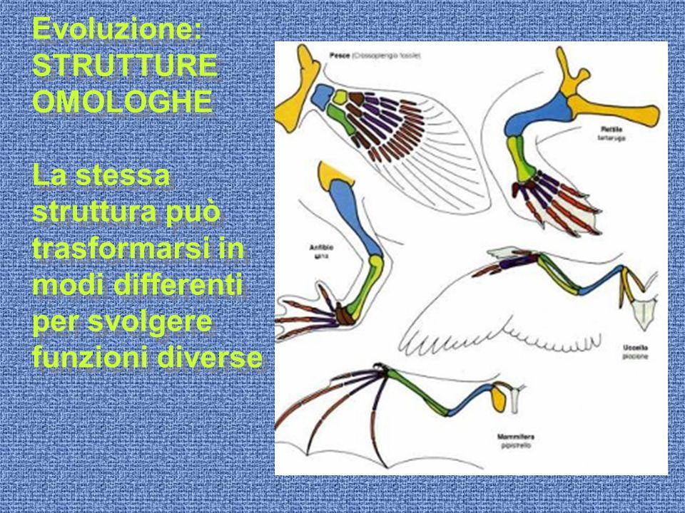 Evoluzione: STRUTTURE OMOLOGHE