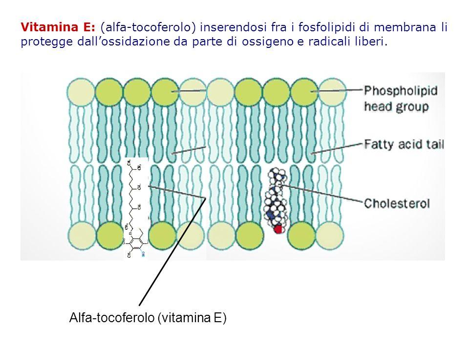 Alfa-tocoferolo (vitamina E)