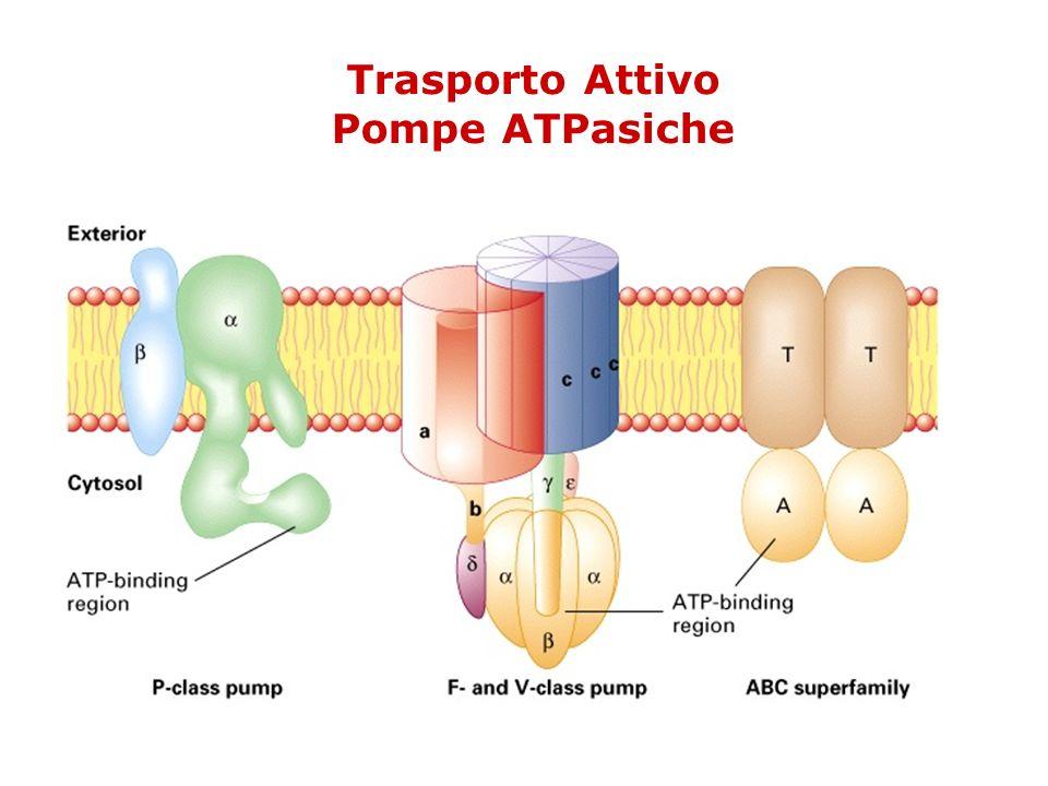 Trasporto Attivo Pompe ATPasiche