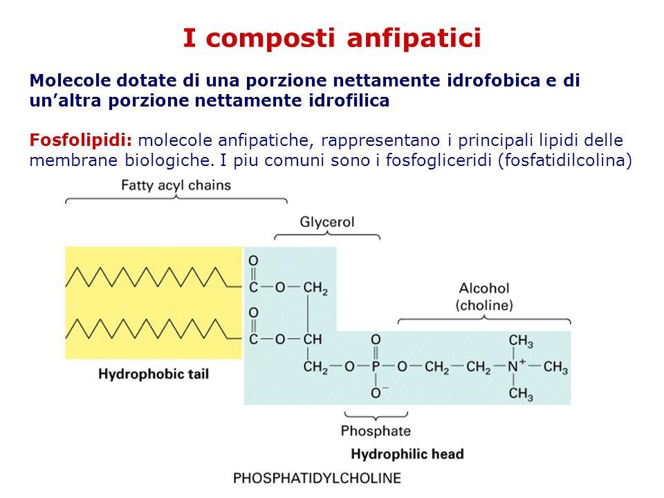 I composti anfipatici Molecole dotate di una porzione nettamente idrofobica e di un'altra porzione nettamente idrofilica.