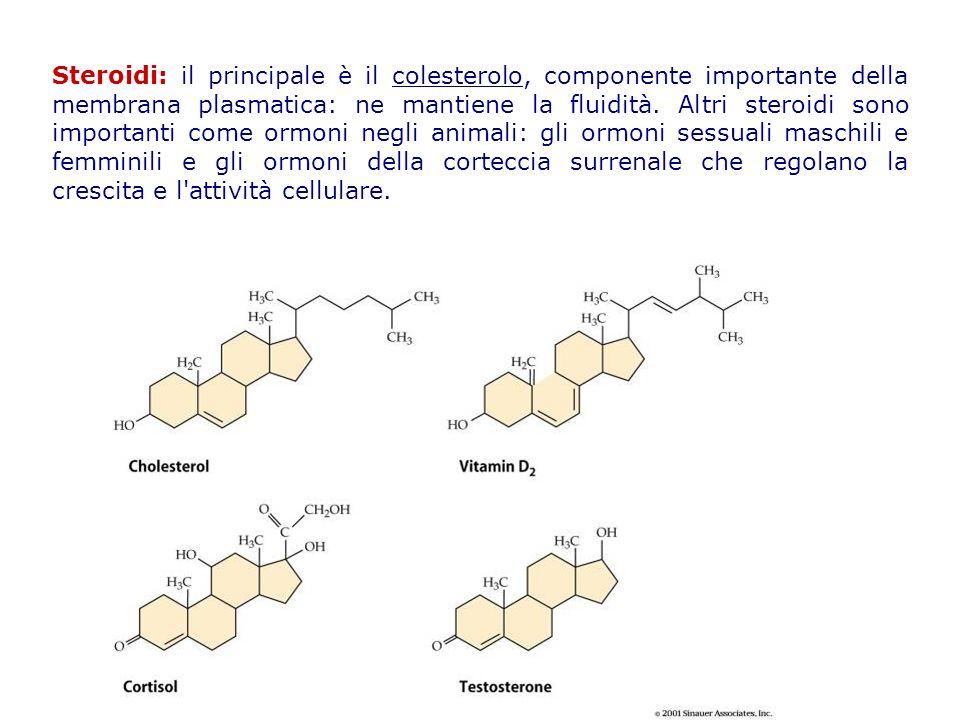 Steroidi: il principale è il colesterolo, componente importante della membrana plasmatica: ne mantiene la fluidità.