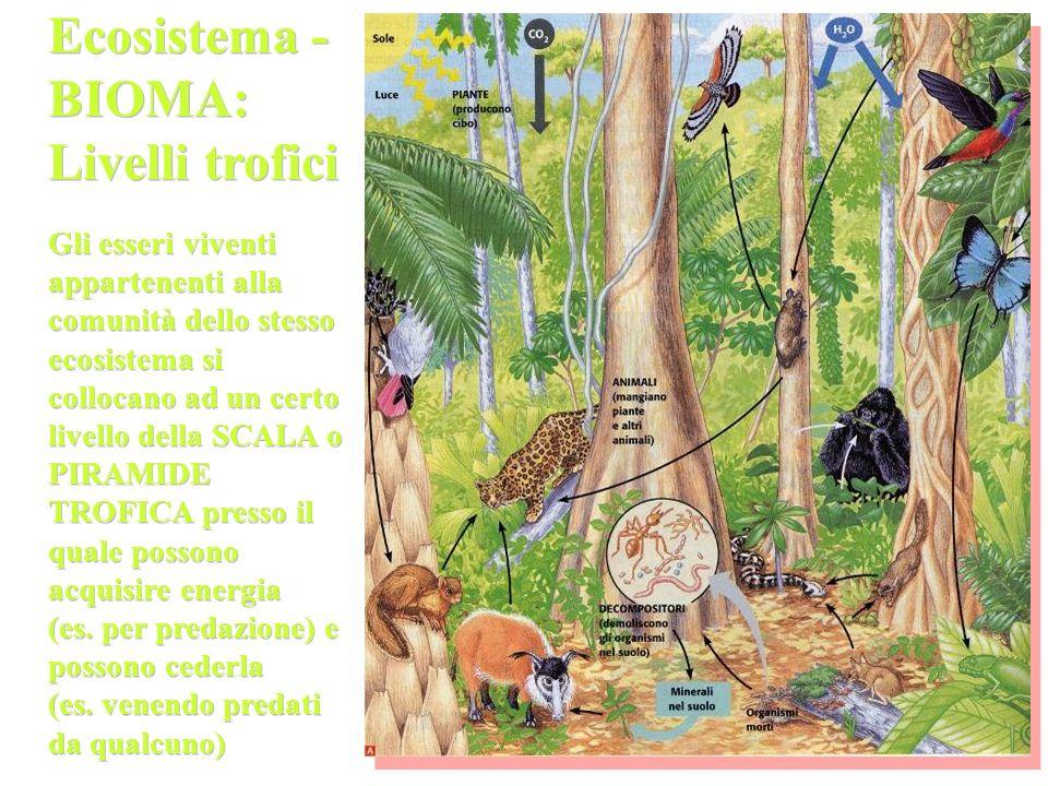 Ecosistema - BIOMA: Livelli trofici
