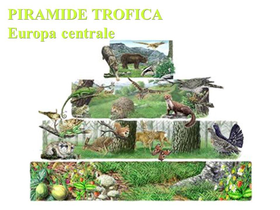 PIRAMIDE TROFICA Europa centrale
