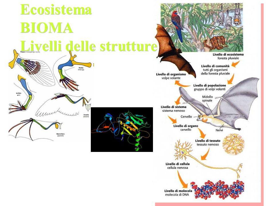 Livelli delle strutture