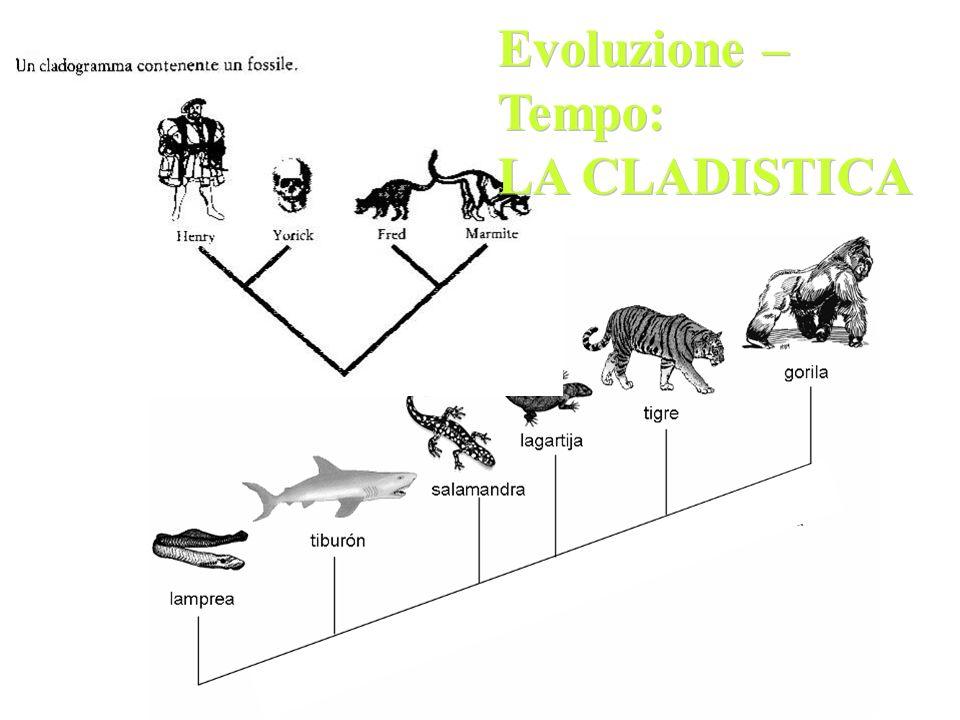 Evoluzione – Tempo: LA CLADISTICA