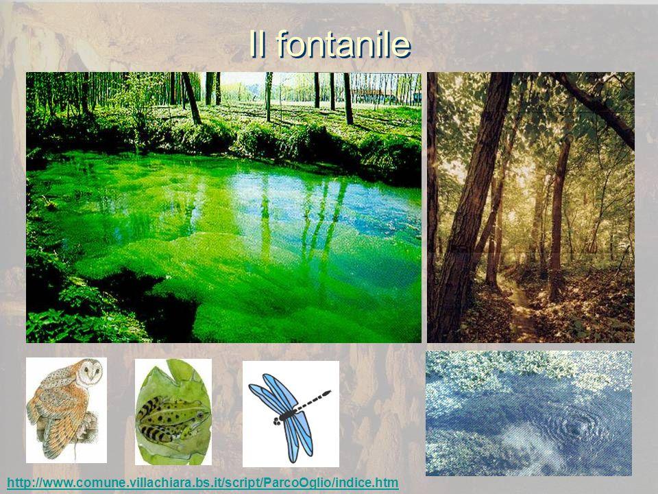 Il fontanile http://www.comune.villachiara.bs.it/script/ParcoOglio/indice.htm