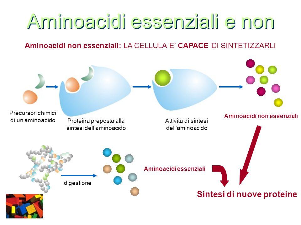 Aminoacidi essenziali e non