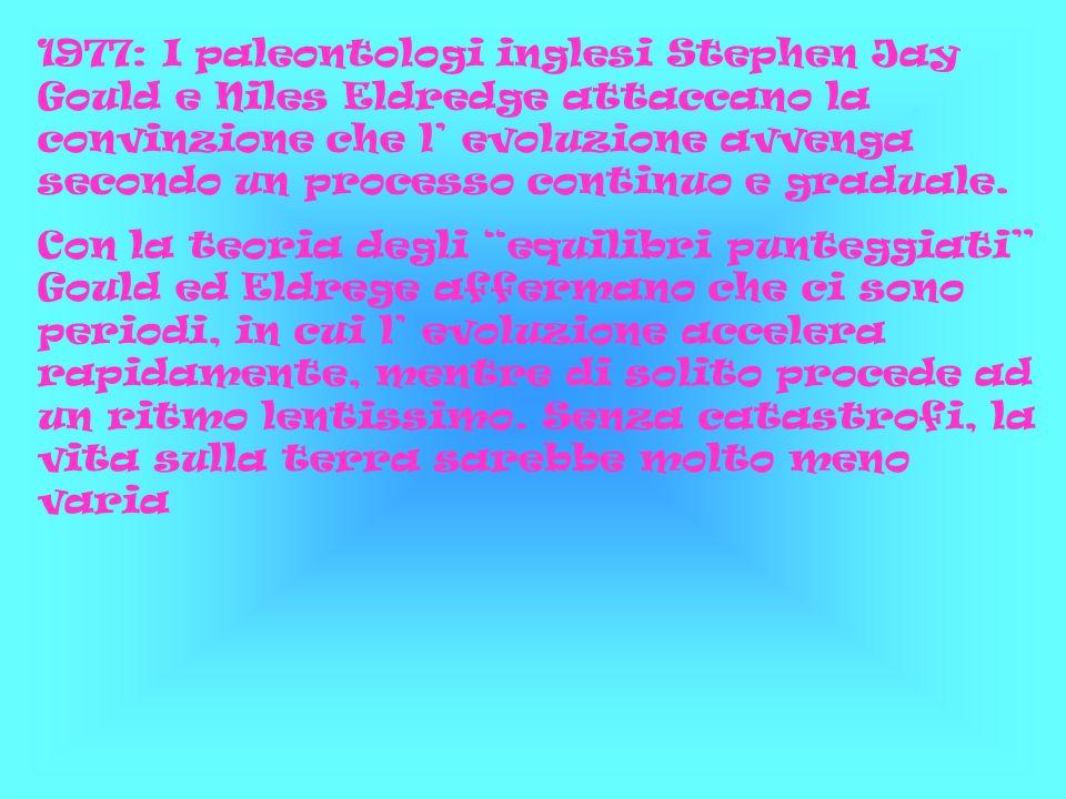 1977: I paleontologi inglesi Stephen Jay Gould e Niles Eldredge attaccano la convinzione che l' evoluzione avvenga secondo un processo continuo e graduale.