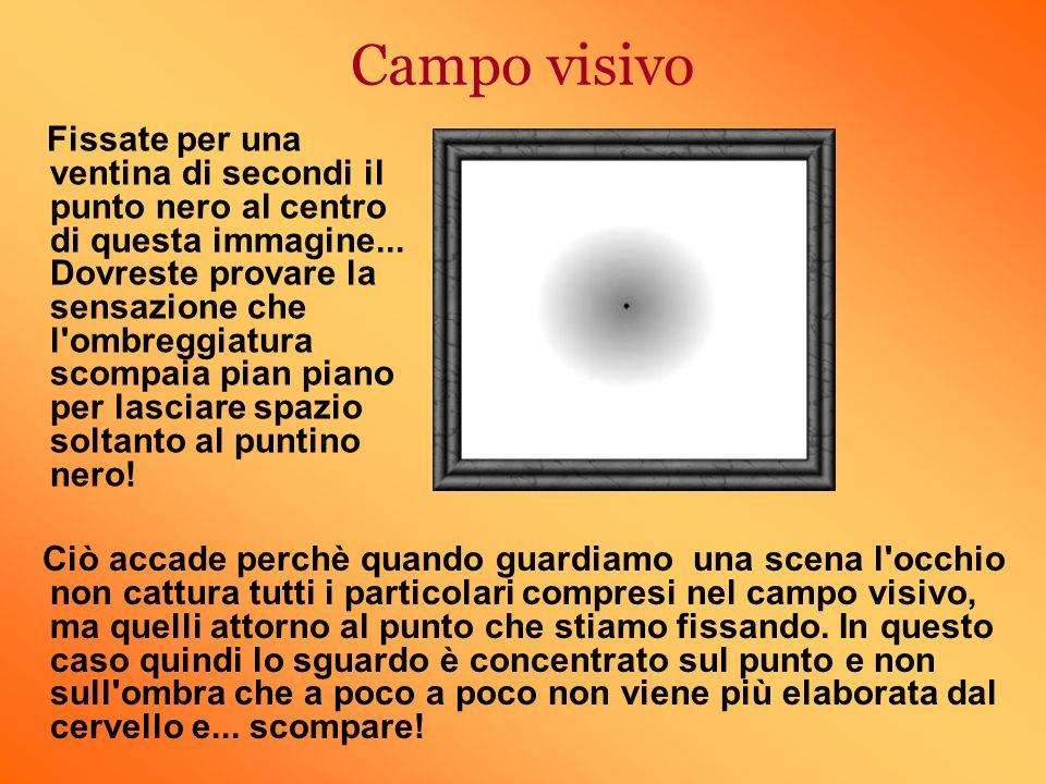 Campo visivo