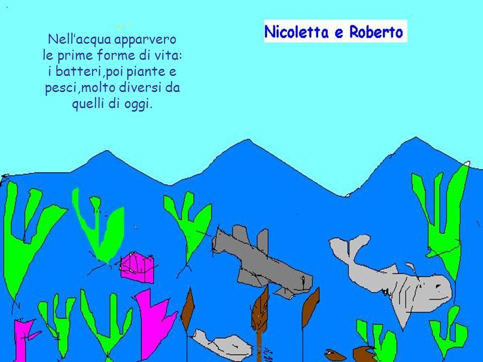 Nell'acqua apparvero le prime forme di vita: i batteri,poi piante e pesci,molto diversi da quelli di oggi.