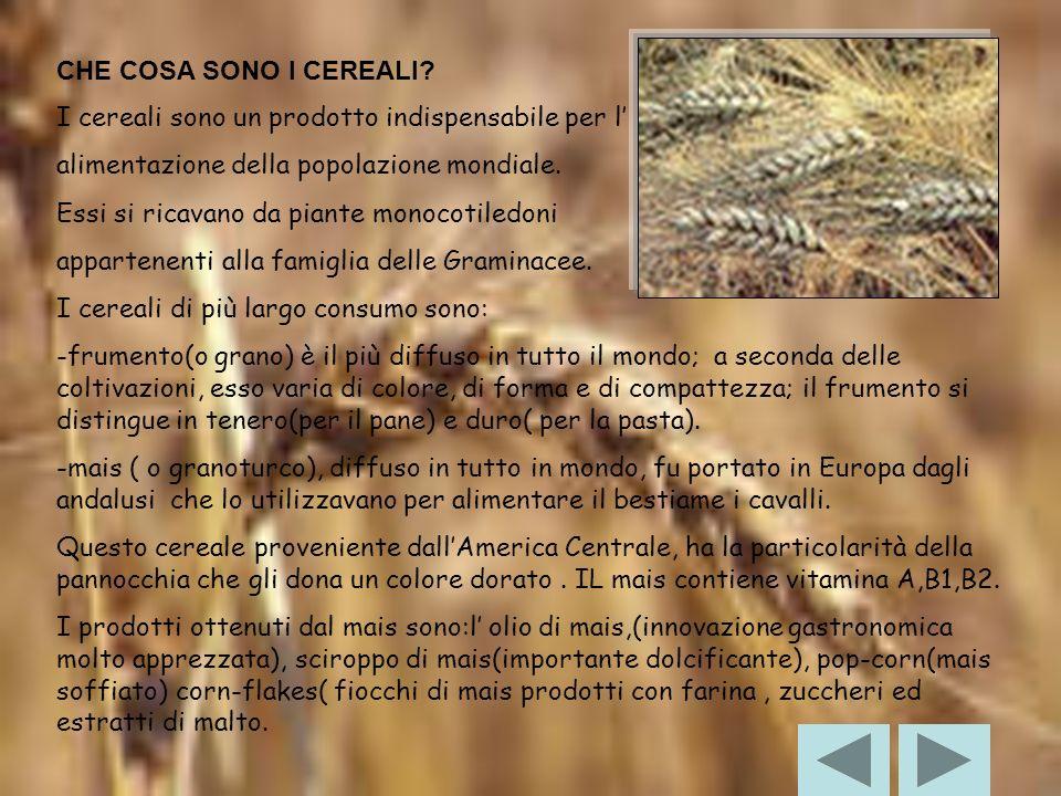 CHE COSA SONO I CEREALI I cereali sono un prodotto indispensabile per l' alimentazione della popolazione mondiale.
