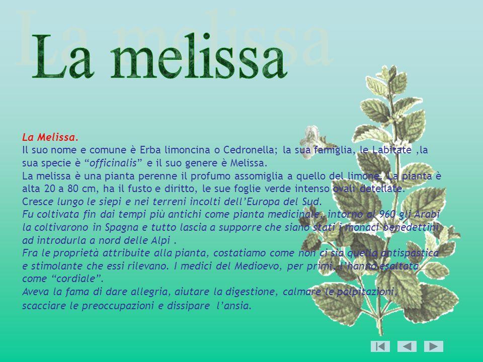 La melissa La Melissa.