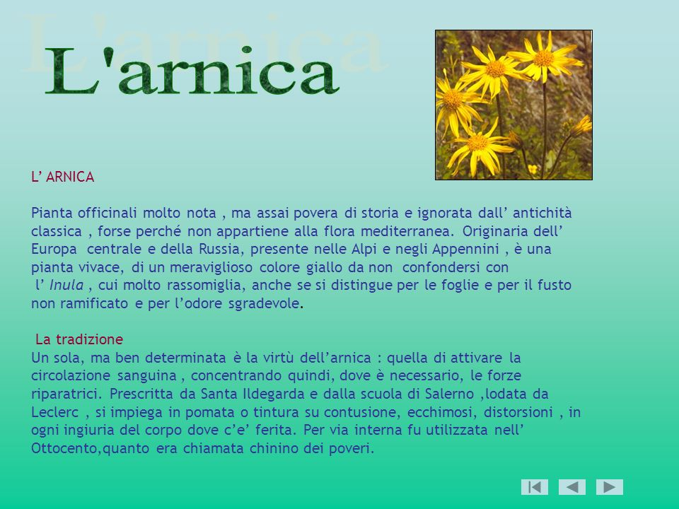 L arnica L' ARNICA.